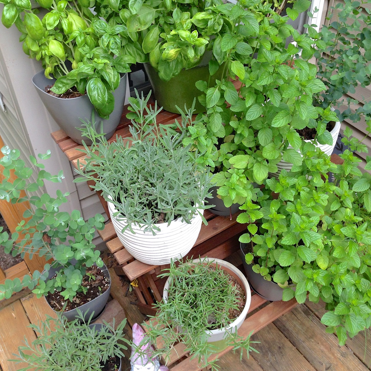 Kitchen Herb Container Garden